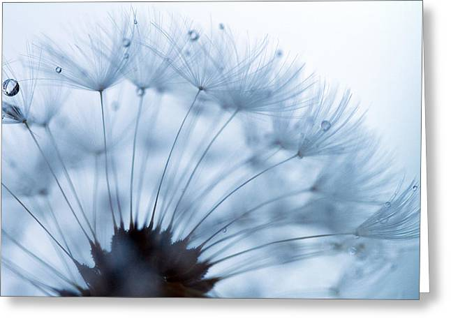 Dandelions Greeting Cards - Spin Round and Round Greeting Card by Rebecca Cozart