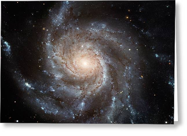 Stellar Paintings Greeting Cards - Spiral Galaxy M101 Greeting Card by Nasa