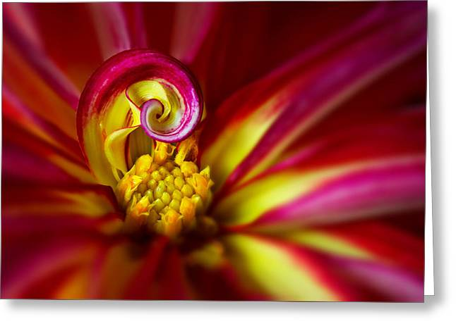 Spiral Greeting Card by Mary Jo Allen