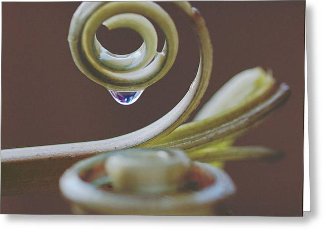 Surprise Greeting Cards - Spirals Greeting Card by Annette Hugen