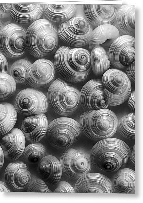 Sea Animal Greeting Cards - Spirals Black And White Greeting Card by Priska Wettstein