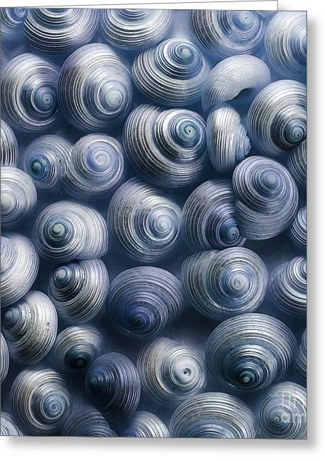 Dusty Blue Greeting Cards - Spirals Blue Greeting Card by Priska Wettstein