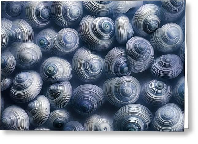 spirals blue Greeting Card by Priska Wettstein