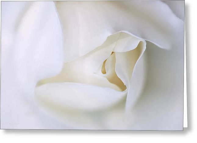 Ivory Roses Greeting Cards - Spirit White Rose Flower Macro Greeting Card by Jennie Marie Schell