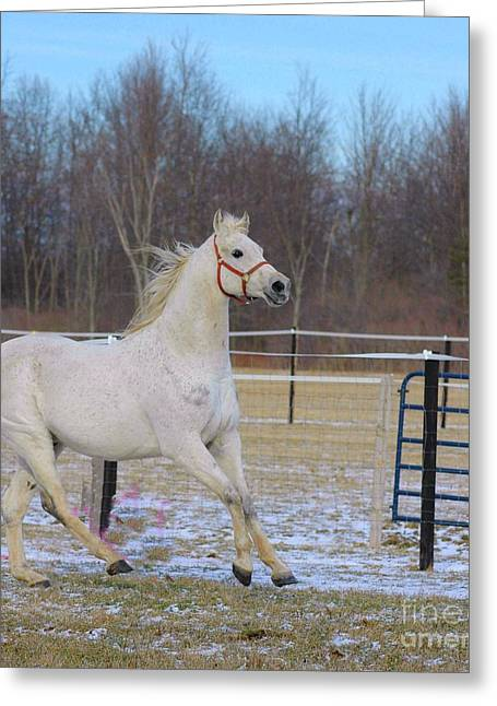 Struckle Greeting Cards - Spirited Horse Greeting Card by Kathleen Struckle