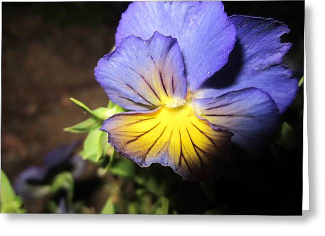 Recently Sold -  - Close Focus Nature Scene Greeting Cards - Spirited Greeting Card by Mike Podhorzer