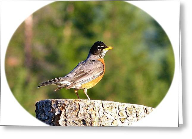 Chipper Greeting Cards - Spirited Robin Greeting Card by Will Borden