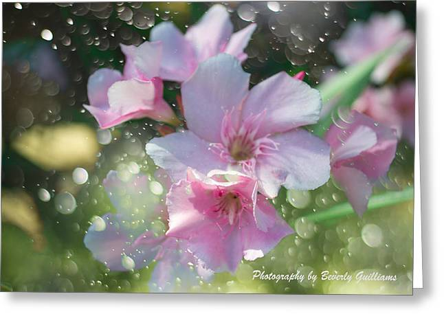 Photograph Pastels Greeting Cards - Splash of Color Greeting Card by Beverly Guilliams