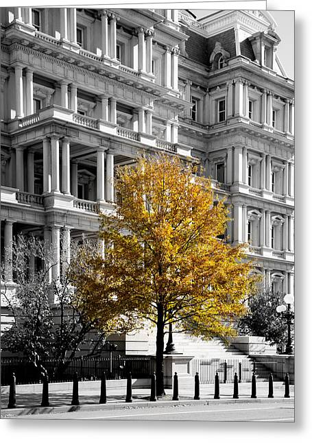 Arlington Greeting Cards - Splash of Gold Greeting Card by Greg Fortier