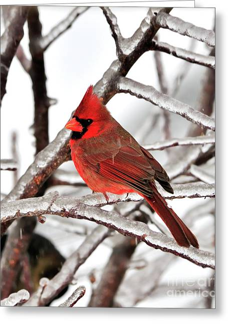Weather Photographs Greeting Cards - Splash of Red Greeting Card by Betty LaRue