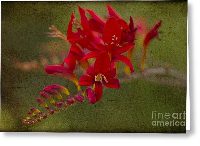 Recently Sold -  - Stigma Greeting Cards - Splash of Red. Greeting Card by Clare Bambers