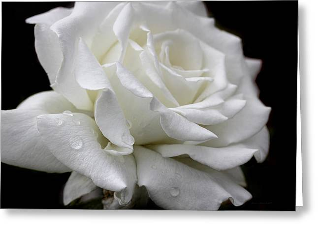 Ivory Rose Greeting Cards - Splendor of a White Rose Flower  Greeting Card by Jennie Marie Schell