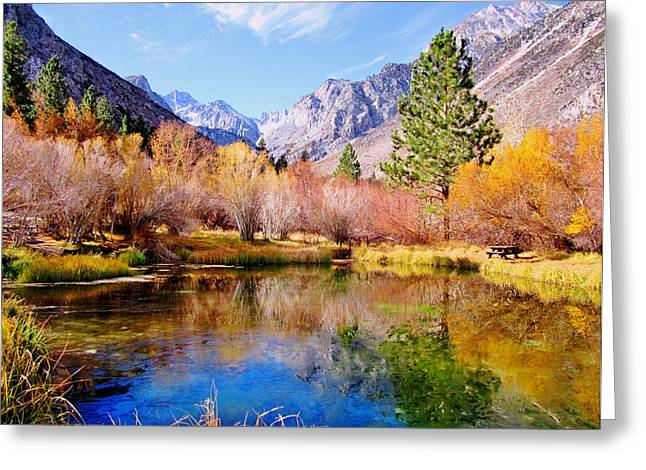 Splendor Of Fall Greeting Card by Marilyn Diaz
