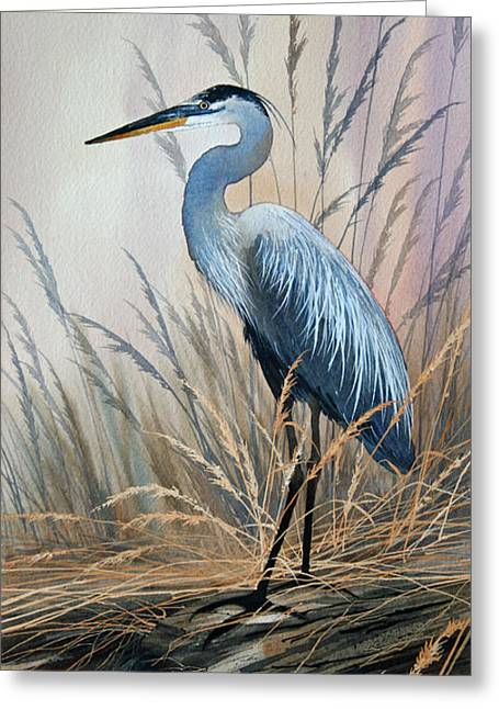 Shore Bird Print Greeting Cards - Splendor of Nature Greeting Card by James Williamson