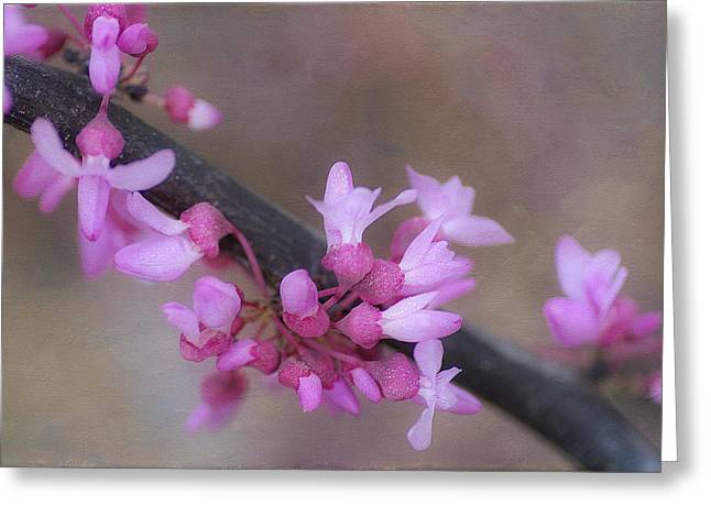 Pink Blossoms Greeting Cards - Splendor Of Spring 3 Greeting Card by Fraida Gutovich
