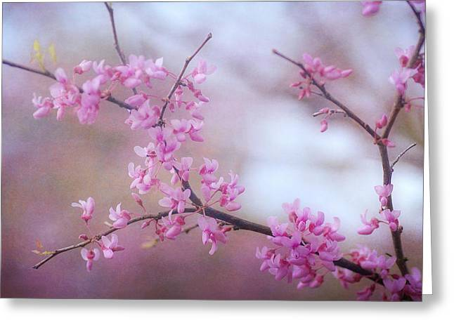 Pink Blossoms Greeting Cards - Splendor Of Spring 4 Greeting Card by Fraida Gutovich