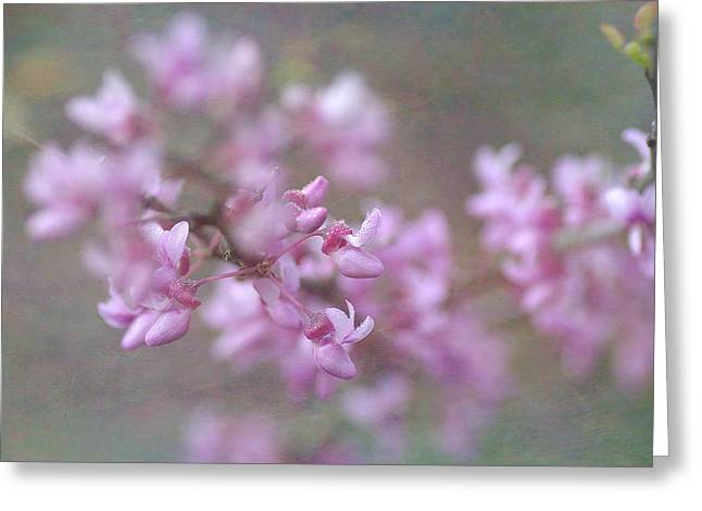 Pink Blossoms Greeting Cards - Splendor Of Spring Greeting Card by Fraida Gutovich