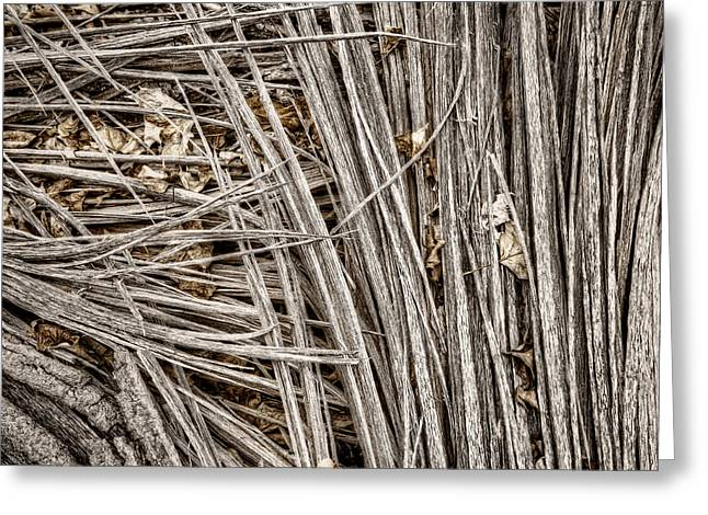 Tree Bark Greeting Cards - Splinters Greeting Card by Scott Norris