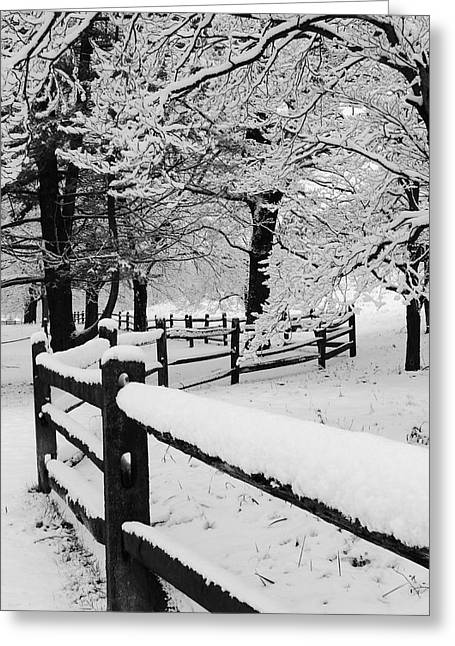 Split Rail Fence Greeting Cards - Split Rail Fence in the Forest Greeting Card by Stephen Hobbs