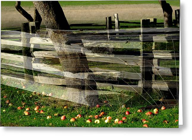 Split Rail Fence Greeting Cards - Split Rail Fence on Fence Greeting Card by Lyn  Perry