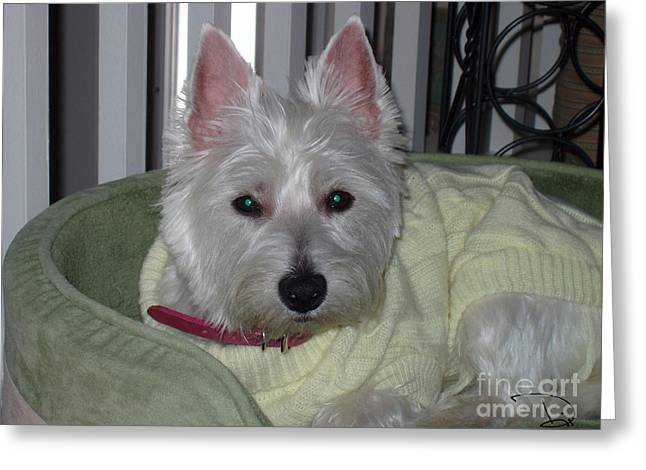 Westie Pups Greeting Cards - Spoiled and Loving It Greeting Card by Dianne Wendell