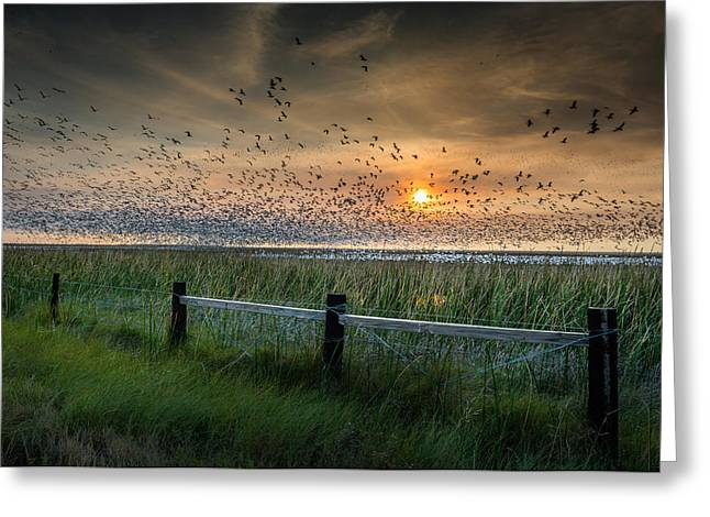 Game Greeting Cards - Spooked Geese Greeting Card by Allen Biedrzycki