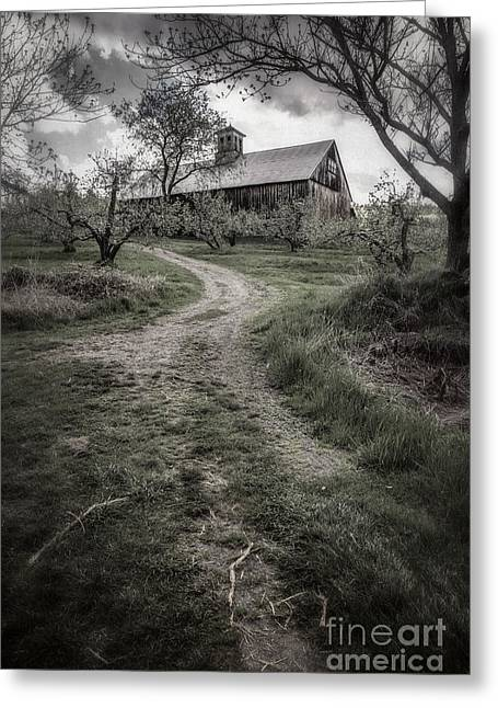 Apple Orchards Greeting Cards - Spooky Apple Orchard Greeting Card by Edward Fielding
