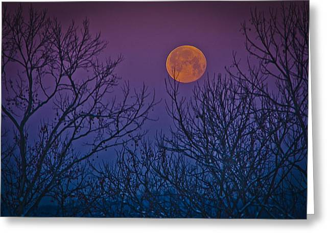 Moon Pyrography Greeting Cards - Spooky Beauty Greeting Card by Shirley Tinkham