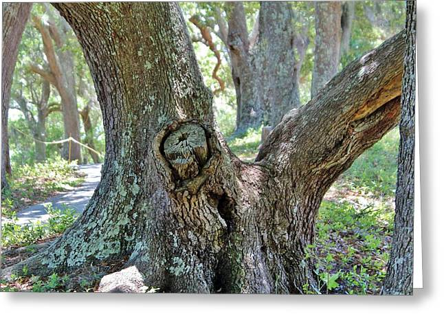 Ghostly Greeting Cards - Spooky Face In A Tree Greeting Card by Cynthia Guinn