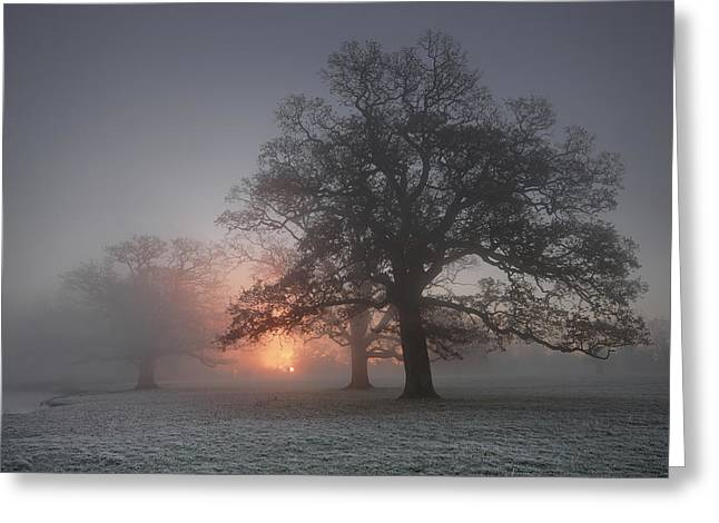 Spooky Misty Morning  Greeting Card by John Chivers