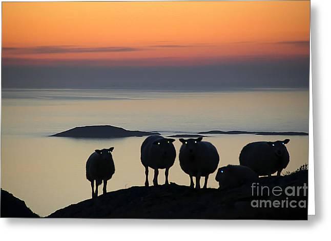 Norwegian Sunset Greeting Cards - Sweet spooky sheep in norwegian sunset Greeting Card by Gunn Samuelsen