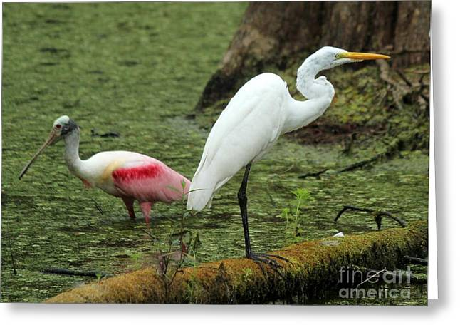 Spoonbill And Egret Greeting Card by Theresa Willingham