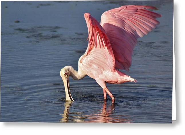 Paulette Thomas Photography Greeting Cards - Spoonbill Wings Greeting Card by Paulette Thomas