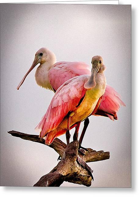 Wild Parrots Greeting Cards - Spoonbills II Greeting Card by Debra and Dave Vanderlaan
