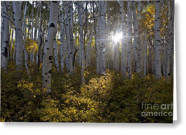 Flares Greeting Cards - Spot of Sun Greeting Card by Jeff Kolker