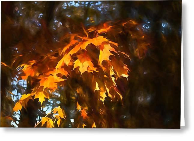 Limelight Greeting Cards - Spotlight on the Golden Maple Leaves - Fall Forest Impressions Greeting Card by Georgia Mizuleva