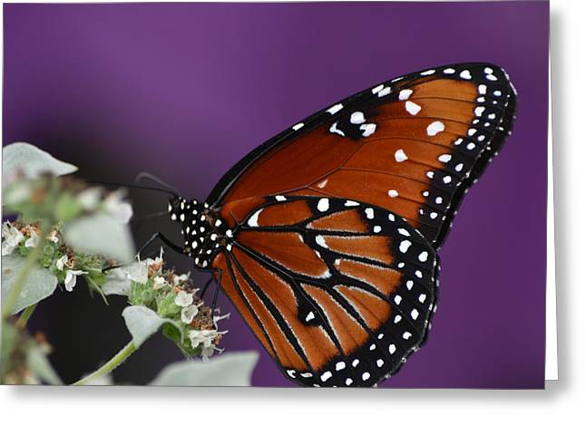 Mkz Greeting Cards - Spotted Beauty Greeting Card by Mary Zeman