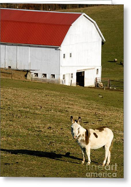Meadow Greeting Cards - Spotted Donkey Looks Uninterested Greeting Card by Amy Cicconi