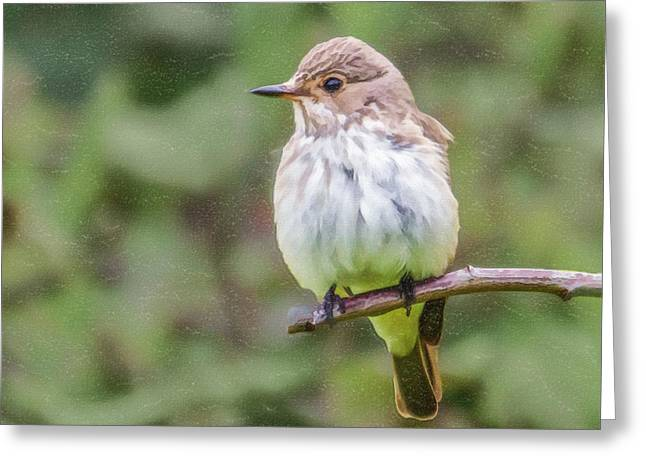 Nature Greeting Cards - Spotted Flycatcher Greeting Card by Liz Leyden