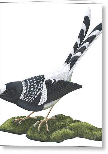 Vertical Drawings Greeting Cards - Spotted forktail Greeting Card by Anonymous
