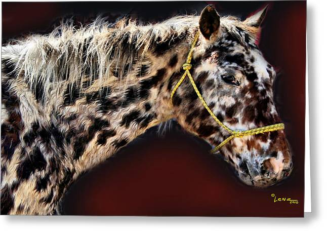 Equine Posters Greeting Cards - Spotted Horse Greeting Card by George Lenz