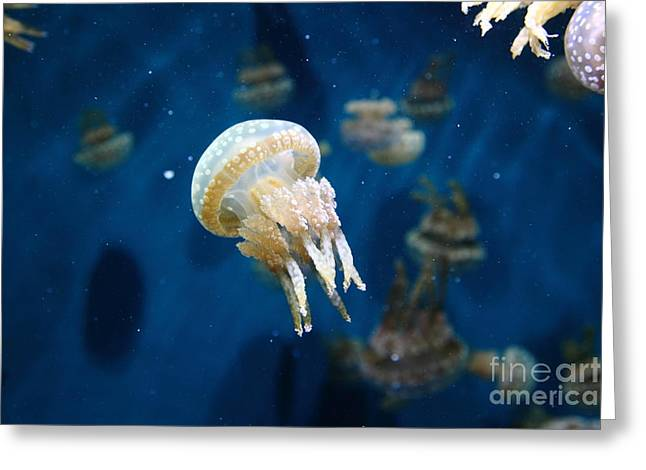 Snorkel Greeting Cards - Spotted Jelly Fish 5D24950 Greeting Card by Wingsdomain Art and Photography