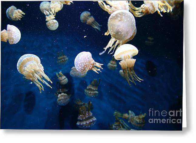 Jelly Fish Greeting Cards - Spotted Jelly Fish 5D24951 Greeting Card by Wingsdomain Art and Photography