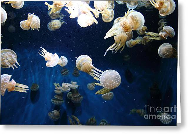 Spotted Jelly Fish 5d24952 Greeting Card by Wingsdomain Art and Photography