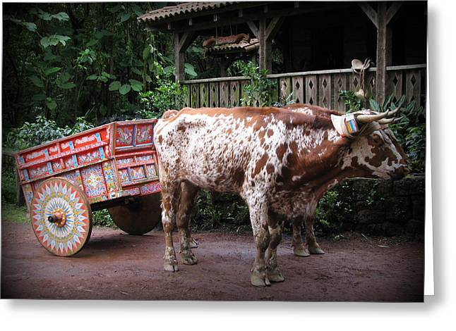 Oxen Framed Prints Greeting Cards - Spotted Oxen Greeting Card by Carlton Britt