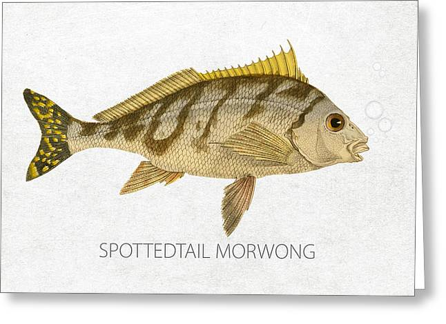 Aquarium Fish Digital Greeting Cards - Spottedtail morwong Greeting Card by Aged Pixel