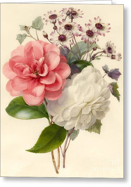 Flower Blooms Drawings Greeting Cards - Spray of Three Flowers Greeting Card by Marie Anne