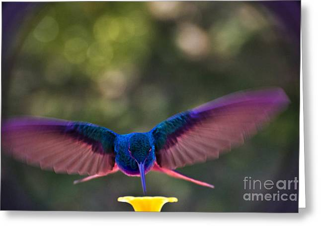 Hovering Greeting Cards - Spread Eagle Formation Greeting Card by Al Bourassa