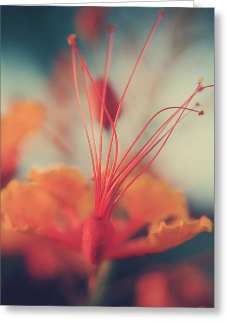 Bird Of Paradise Greeting Cards - Spread the Love Greeting Card by Laurie Search