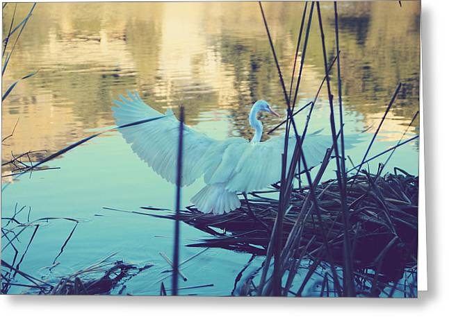 Heron.birds Greeting Cards - Spread Those Wings and Fly Greeting Card by Laurie Search